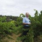 El ancho de su red depende de la altura de su enrejado de uva.