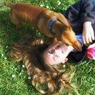 Desaliente la excavación del jardín para que pueda disfrutar del tiempo al aire libre con su perro.