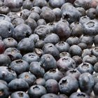 Blueberries are packed with immune-stimulating antioxidants.