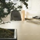 Seasonal plants can add a festive air to an office.