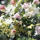 Pastel pink roses come in a variety of different shapes.