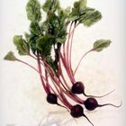Food grade beet juice extract kills many common weeds.
