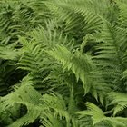 Several ferns tolerate clay soils, and many require some shade.
