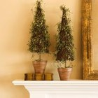 Topiary ivy next to or in front of a mirror create a focal point.