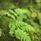 Ferns and moss are age-old companions that look beautiful together.