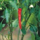 Spicy or mild peppers grow well on balcony gardens.