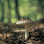 Fungi are important organisms for helping recycle nature's waste.