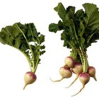 Turnips are a key ingredient for French stews, like pot au feu.
