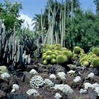 A cactus garden in front of a window discourages burglers from using that window to get in your home.