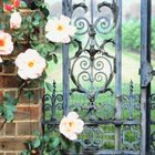 Wrought Iron adds elegance and maybe even some mystery.