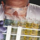 Toxicologists research hazardous substances and create treatments for exposure.