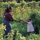 Benefits to children and environmental concerns may affect garden-soil choices.