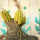 A repurposed boot serves as a planter for any type of plant.
