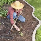 Keep garden area clear of weeds and grasses that beetles like to feed on.