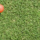 Look for artificial grass that has a natural color.