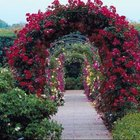 A rose-covered arbor is a stunning structure.