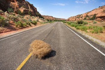 Tumbleweeds can create swerving hazards on highways.