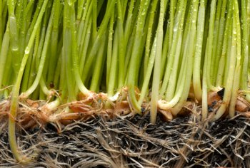 Promote healthy root growth with root stimulators.