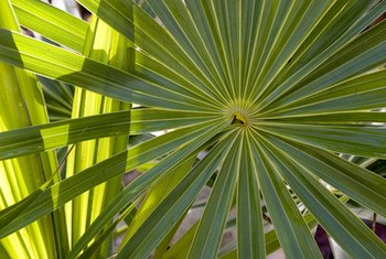 Drying the branches of a palm tree can take awhile if you do it outside.