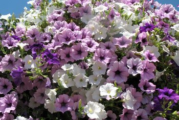 Decorate your plantation-house porch with hanging baskets of flowers.