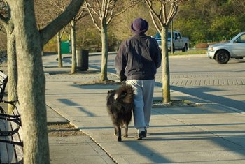 Dog walking and pet sitting are inexpensive businesses to start.