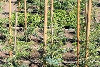 Stakes are easy to use, but not as flexible as a trellis.