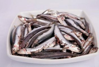 Anchovies are small silvery fish found in the Mediterranean Sea and off the coast of Southern Europe.
