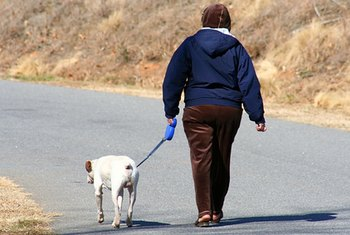 Walking dogs is an easy way to earn additional income.