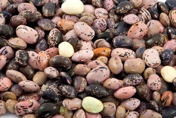 Beans provide a source of nonheme iron.