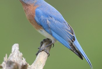 Provide a home for bluebirds.