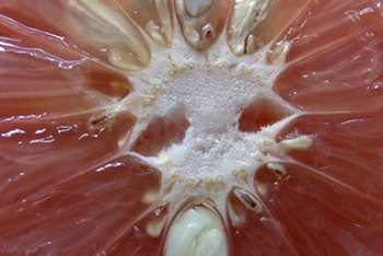 Liquid extracted from grapefruit seeds has a wide array of health benefits.