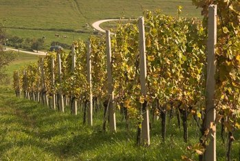 Wineries make higher profits off direct sales.