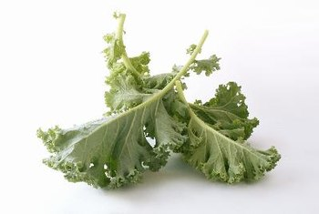 Kale chips are not fattening.