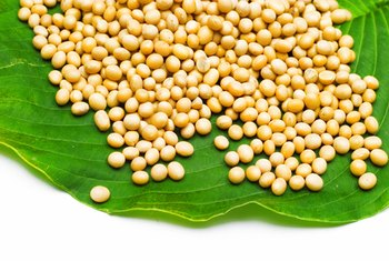 Soy milk is made from soybeans.