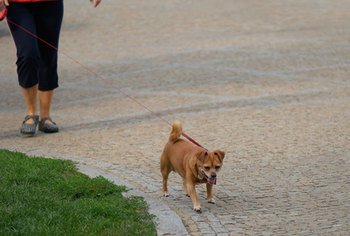 You can start a small business involving pet care, including dog-walking.