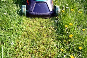 Get everything lined up to start your lawn care business.