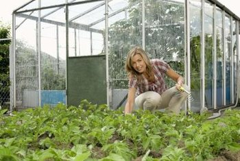 The major difference between a greenhouse and a garden cloche is size.