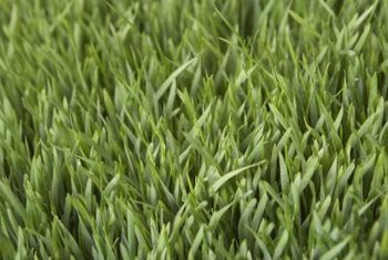 Cool-season grass blends create a lush green lawn.