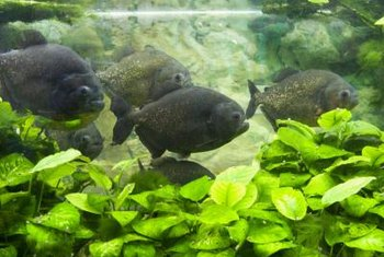 Starting an aquarium maintenance company requires knowledge and planning.