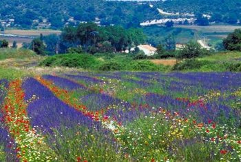 Color fills the Italian countryside, thanks to its flowers.