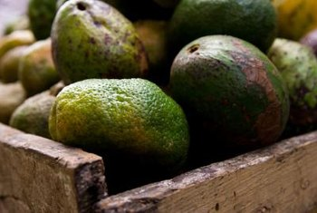 The skin of tropical varieties of avocados ranges from light to dark green.