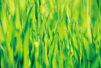 Chemical pre-treatments help grass seed fight disease.