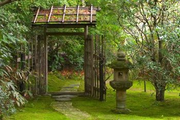 Grow Katsura trees in a Chinese or Japanese garden.