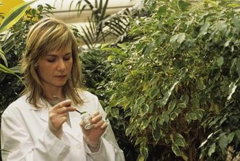 Plant biologists, or botanists, study plants to improve the nutritional value of crops or to discover new therapeutic drugs.