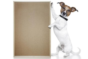 If your dog could choose your flooring, it would probably choose cork.
