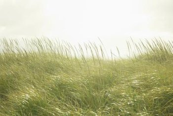 Grasscloth wall coverings bring the beauty of natural grasses into your home.
