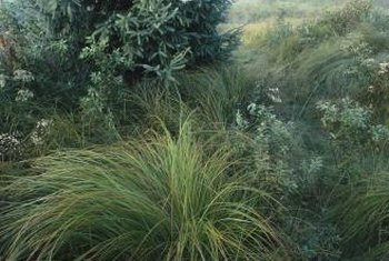 Cascading grasses can make an unusual and highly decorative landscape addition.