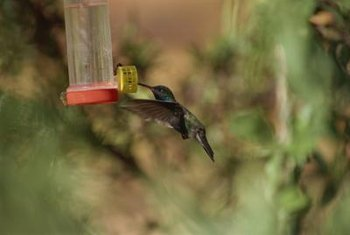 The right feeder in the right location makes hummingbird watching a pleasure.