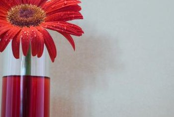 Cut gerbera daisy blooms work well in a group or single floral arrangement.