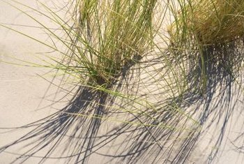 Not all grasses need all-day sun or rich soil to thrive.